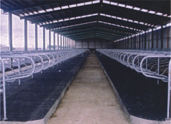 Continuous Rubber